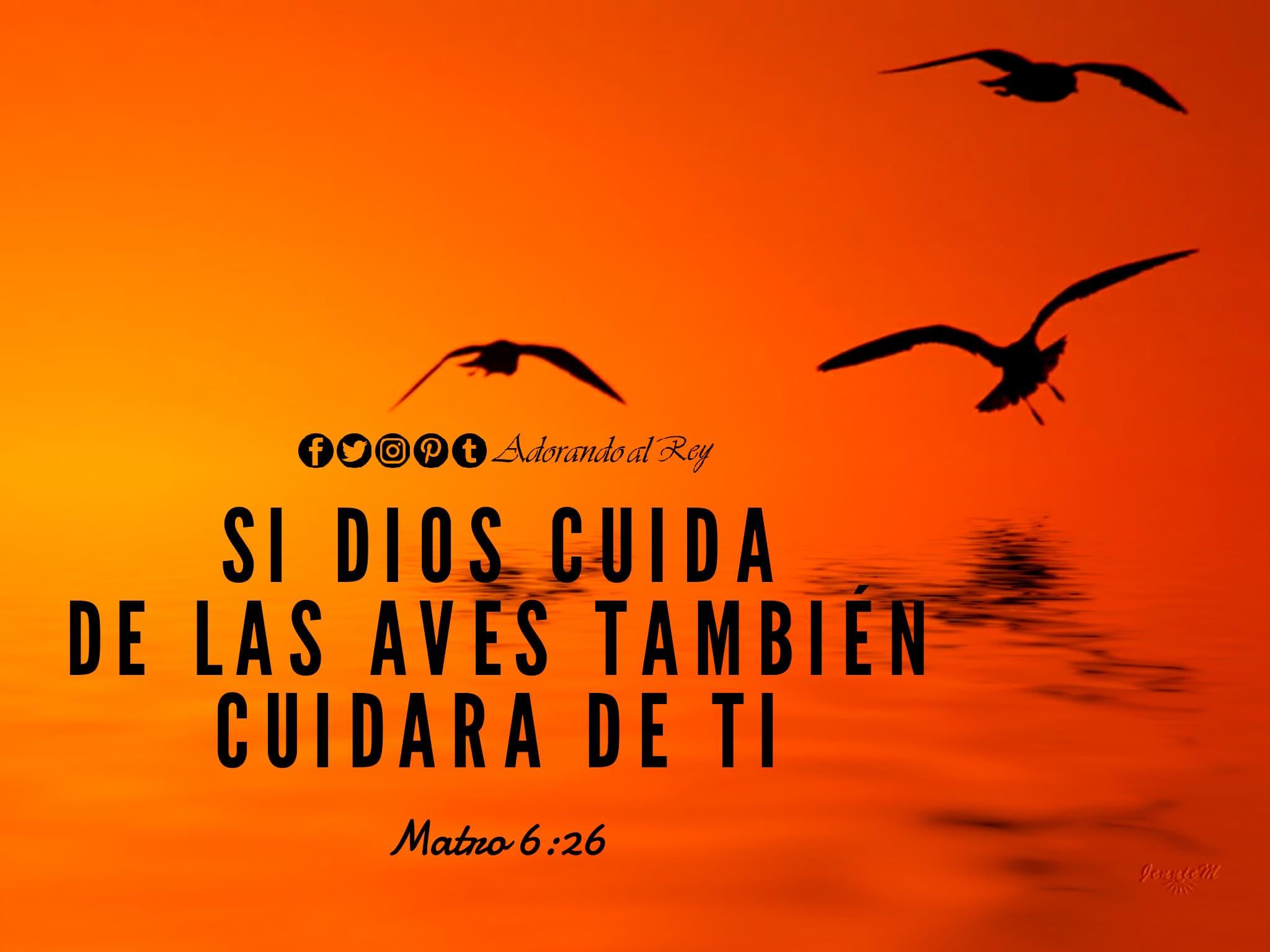 Mateo 6:26