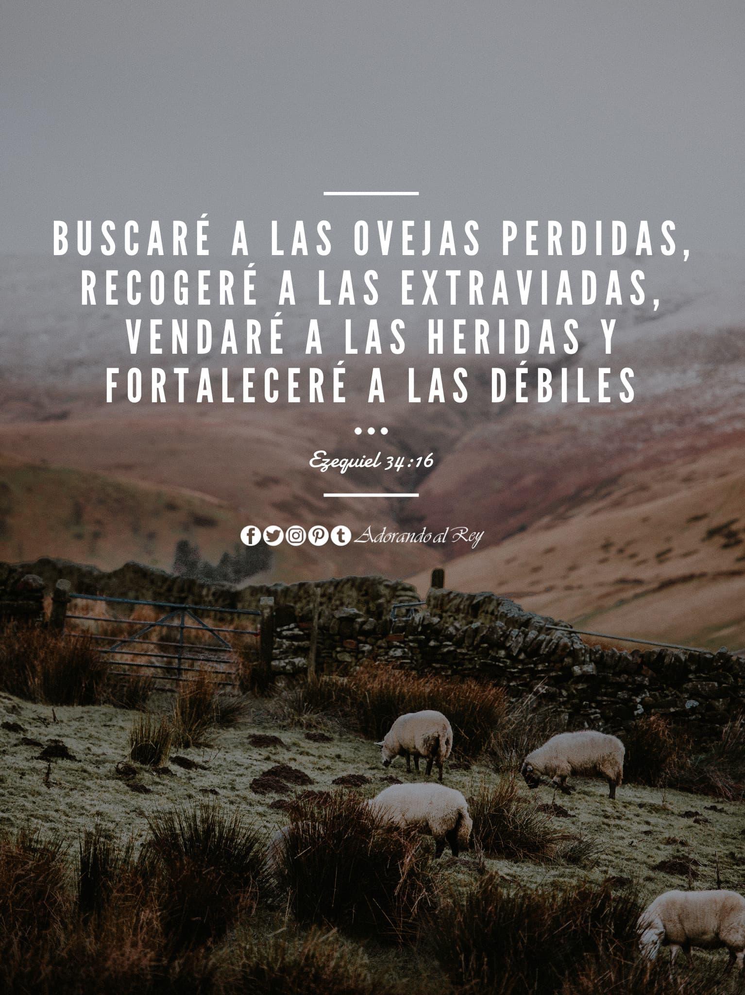Ezequiel 34:16